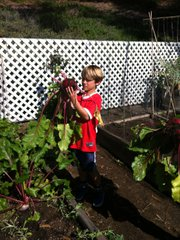 Can't beet this: Skyline student harvests a large beet from the garden. Courtesy photo